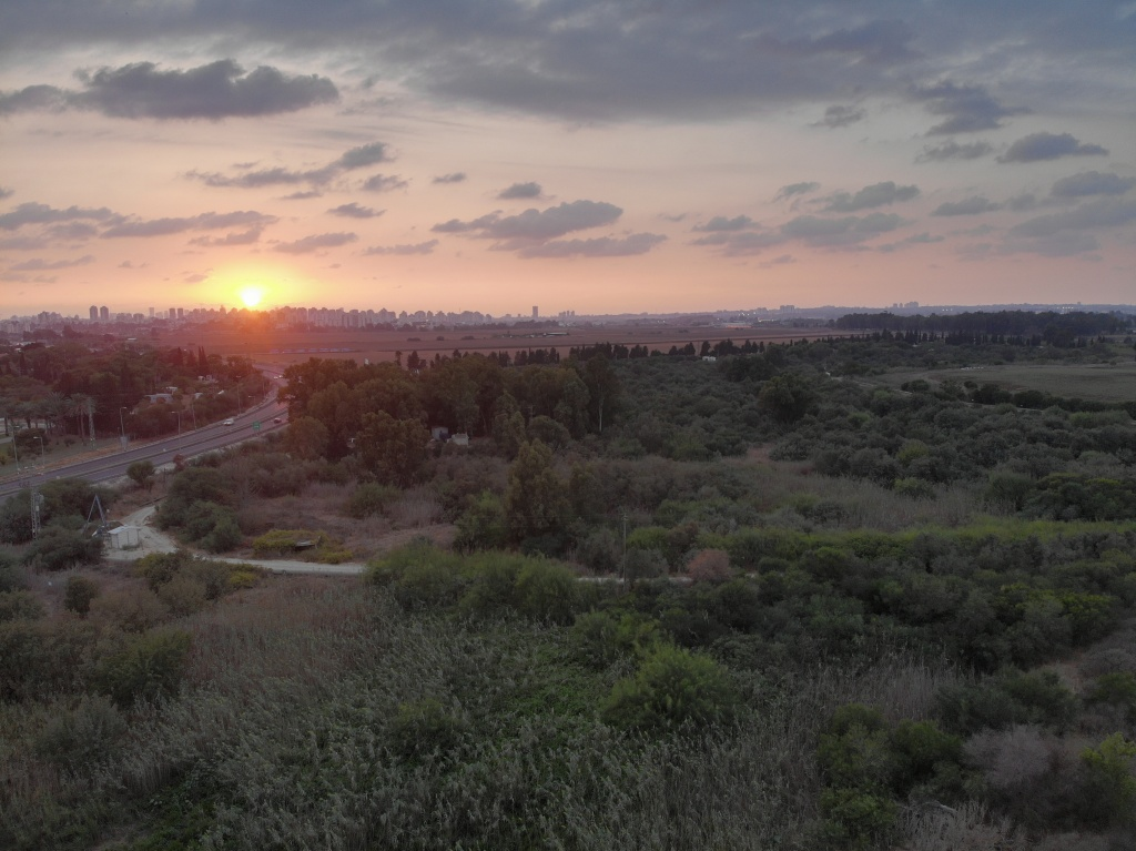 Costal plain of Sharon