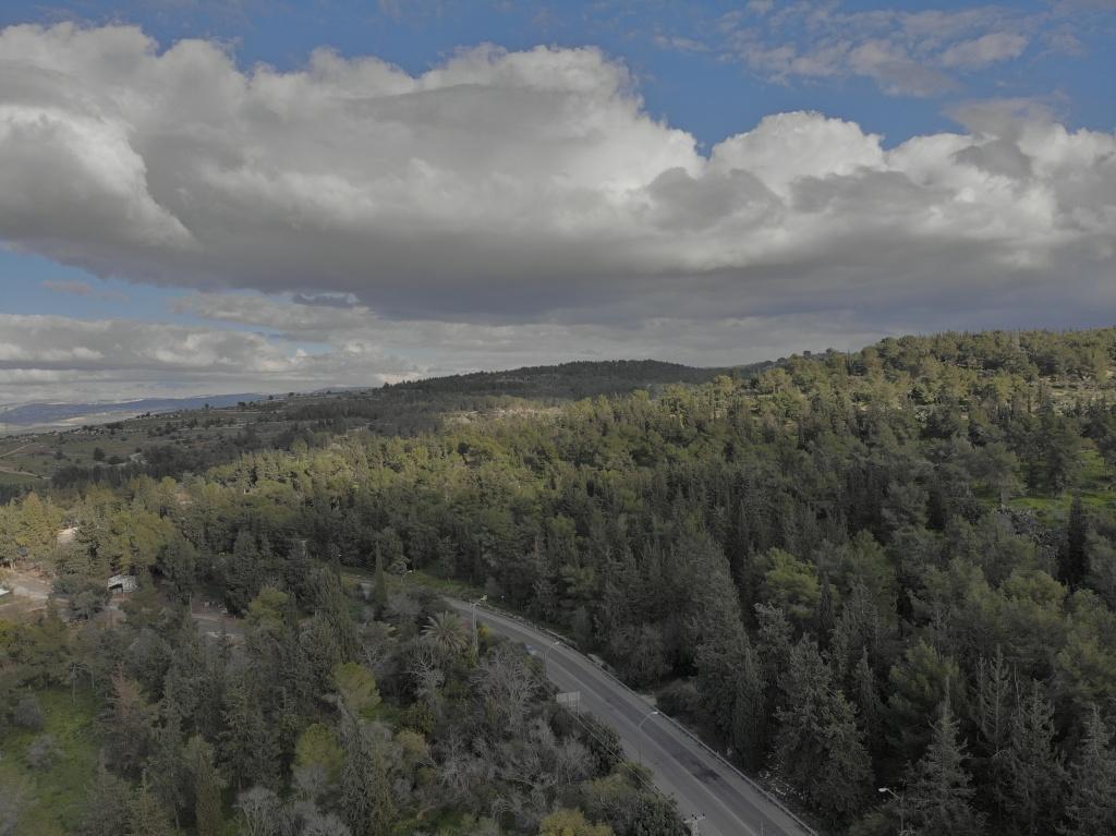Ayalon Forest at Judea Hills near to Emmaus